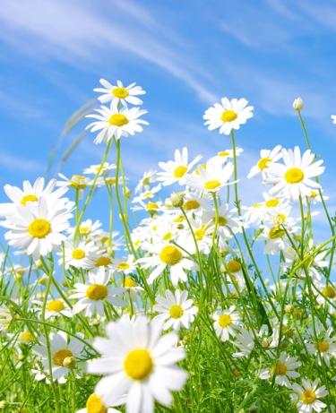 flowers63.jpg